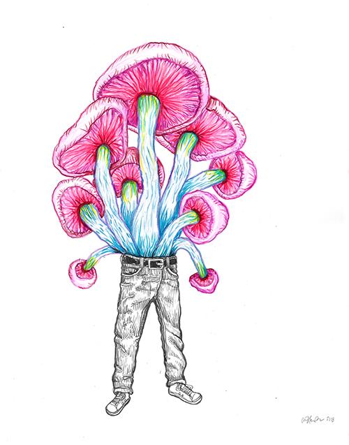 John Casey / Pink Mush / Crayon sur papier – Pencil on paper / 35,5 x 28 cm / 2018