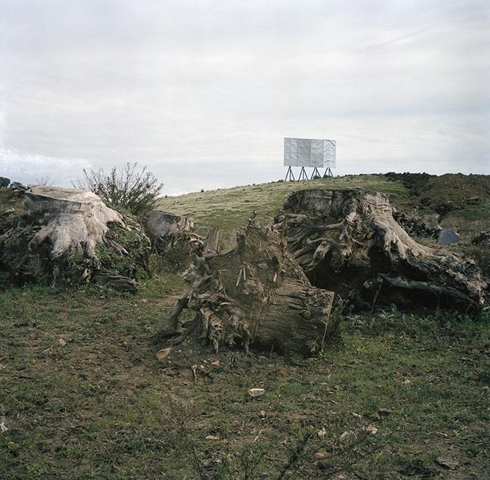 Yto Barrada / Trois souches d'eucalyptus, Ziaten, Tanger / C-print / 80 x 80 cm / 2007